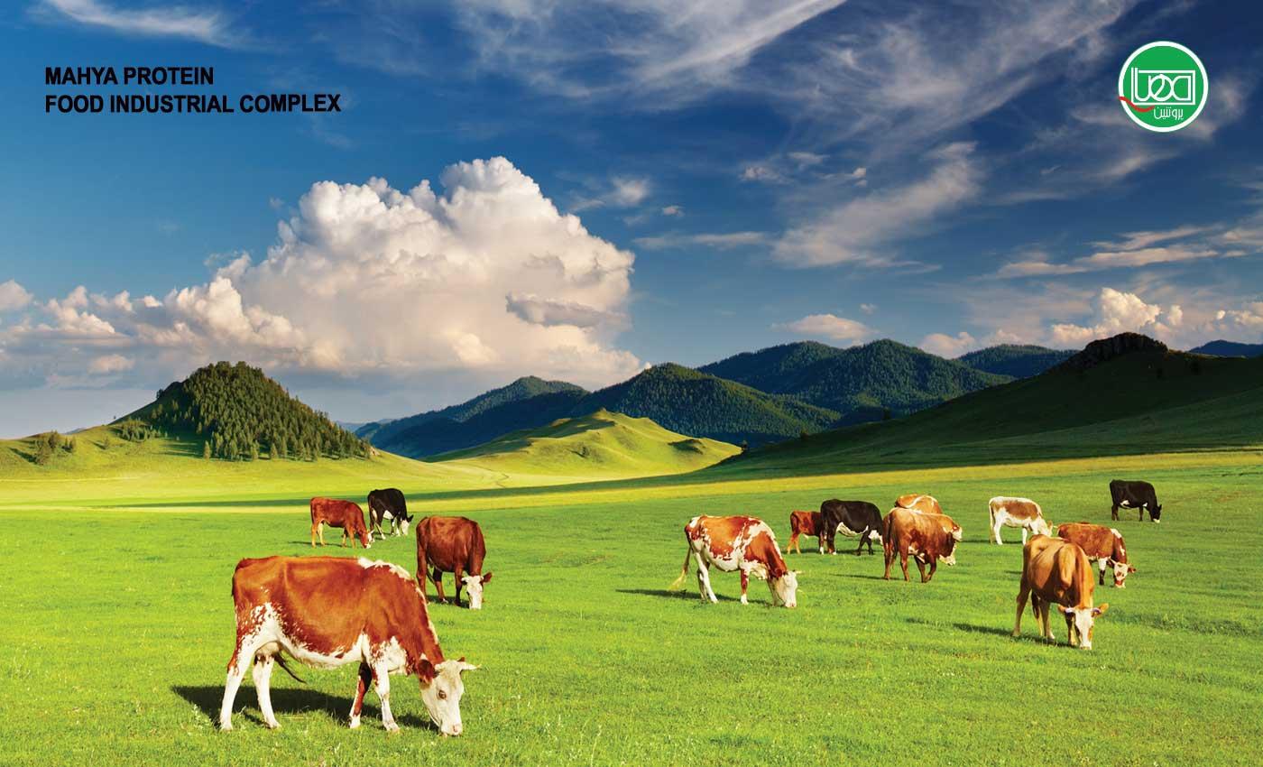 از مزرعه تا سفره با محصولات مهیا پروتئین